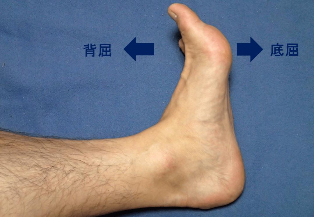足首の動き 底屈と背屈の図説