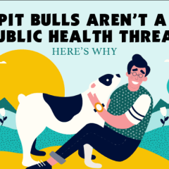 Are Pit Bulls are really a public threat? Facts & figures [Infographic]