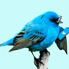Twitter says its employees fell to phone spear phishing