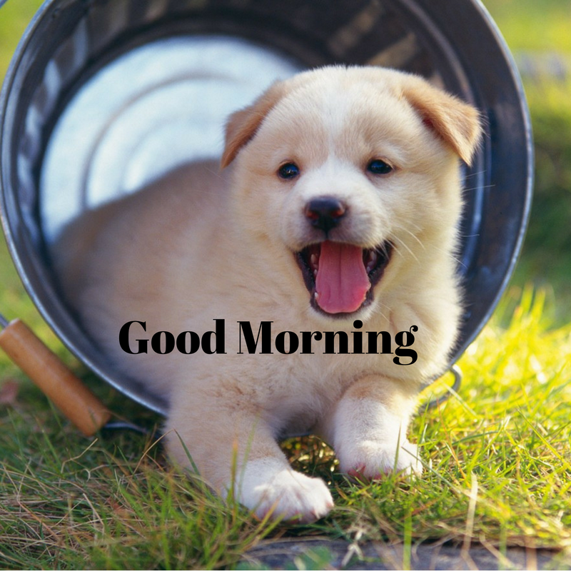 Good Morning HD, wallpapers, whatsapp images, quotes, and ...