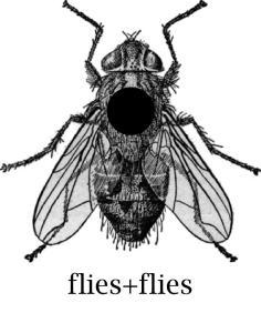 Flies+Flies - sodwee.com