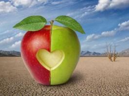 Две половинки яблока