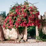 Bouganville e ingresso al giardino