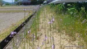 紫色の可憐な花を咲かせている雑草