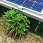 太陽光発電所で草刈りしつつ考えたこと