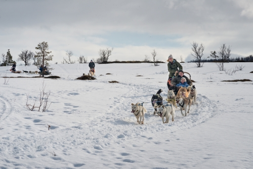 Try Dog Sledding in Norway When Cruising with Hurtigruten