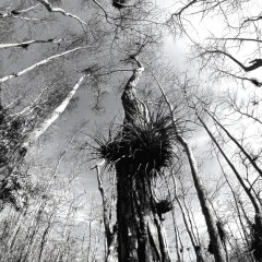 My Date with a Swamp Walk in Big Cypress National Preserve