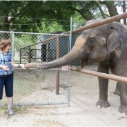 Travel in Florida: All About Elephants at Two Tails Ranch
