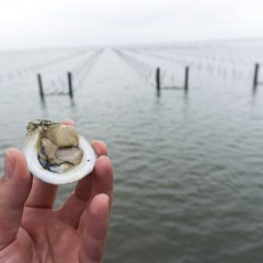 Oyster Farming: Alabama's Newest Seafood Revolution