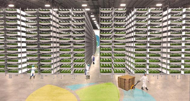 urban-vertical-gardening