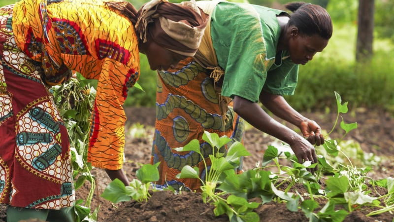 Combat-poverty-by-giving-assistance-to-small-scale-farmers