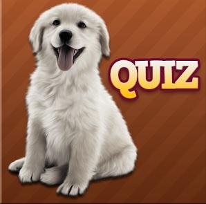 solution Races de chien Quiz niveau 31 à 60