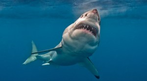 Sea giant monsters