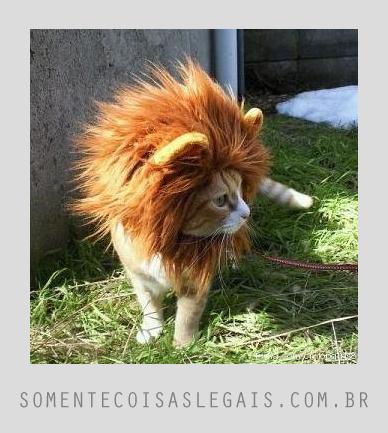 Coisas legais para Facebook - Gato leão