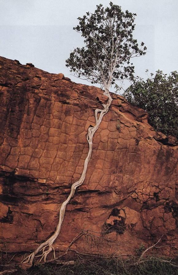arbre-racine