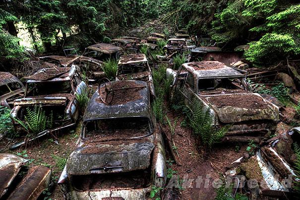 Estacionamento abandonado no meio da floresta