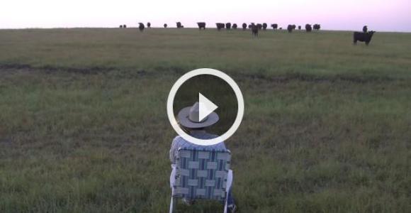 """Vaqueiro toca """"Lorde"""" no trombone e atrai a manada para perto"""