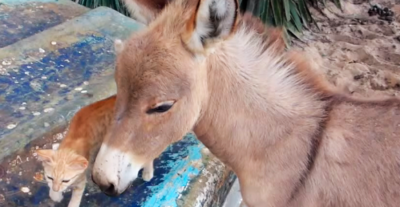 Um gato e um burro protagonizam um vídeo que transborda fofura