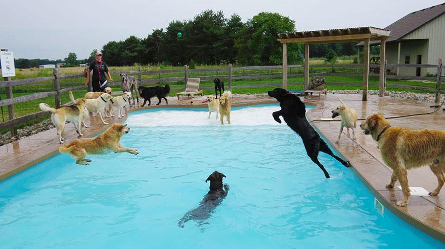 Cachorros se divertem durante festa na piscina melhor do for Piscina party