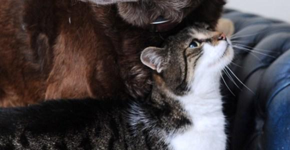 Gato vira guia para um cão cego, mostrando que animais também podem ser amigos