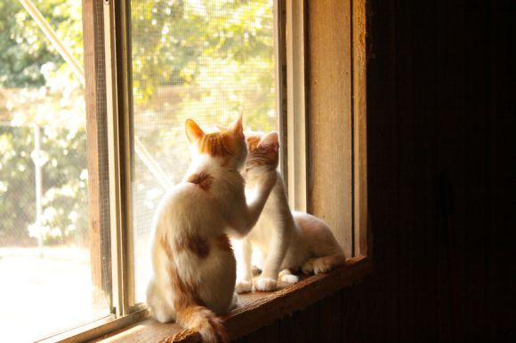 Santuário dos gatos 11