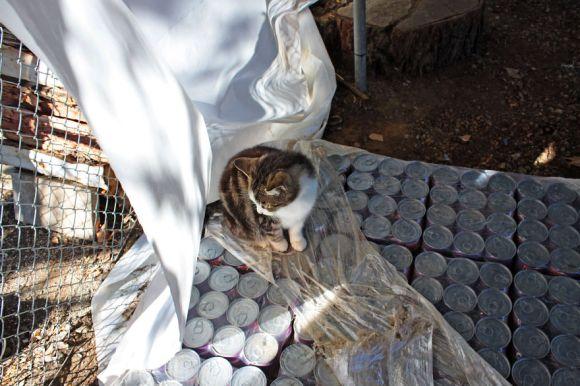 Santuário dos gatos 14
