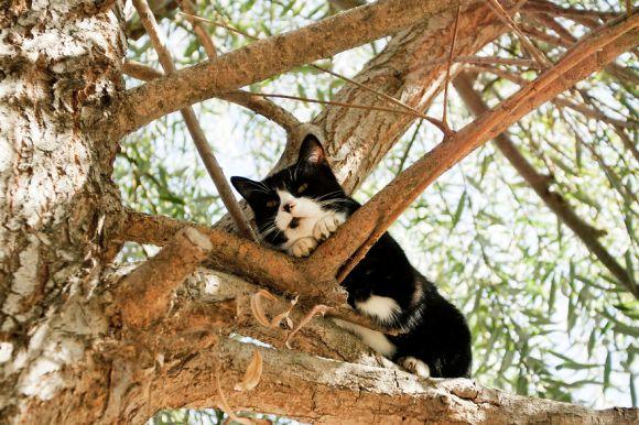 Santuário dos gatos 9