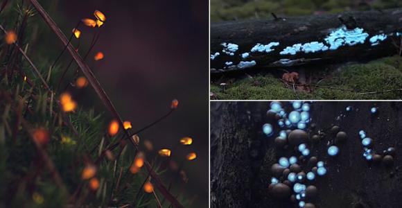 Projetando luzes sobre plantas e animais, artistas criam floresta encantada digna de um conto de fadas