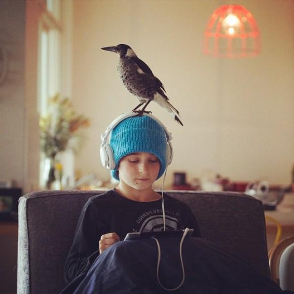 Amizade entre menino e pássaro 11