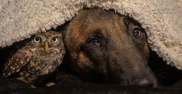 A união entre cão e coruja prova que todas as amizades são possíveis!