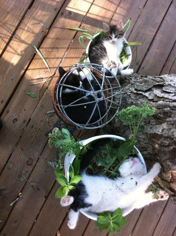 Gatos em vasos 1