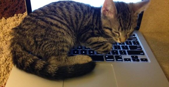 10 Comportamentos do seu gato finalmente explicados!