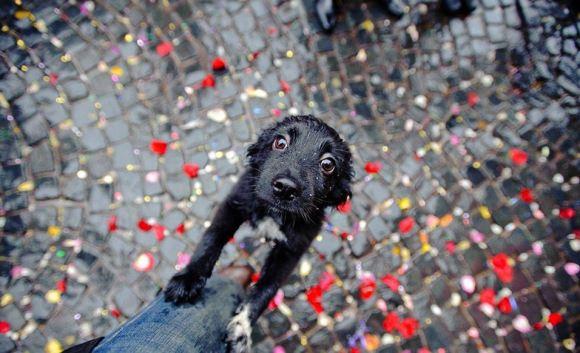 Fotos de cachorros 10