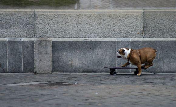 Fotos de cachorros 14