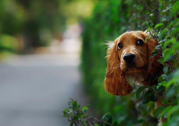 Cachorros que gostam de olhar a rua 14