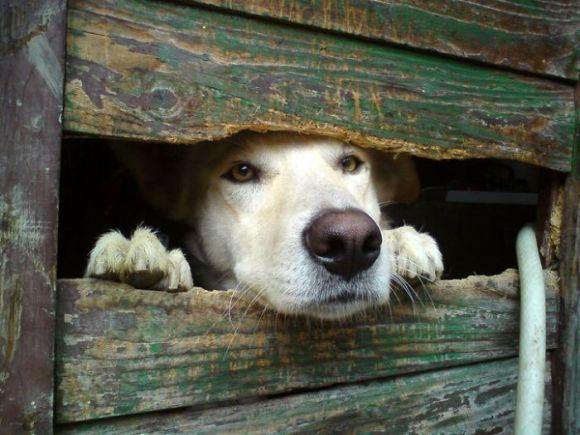 Cachorros que gostam de olhar a rua 19
