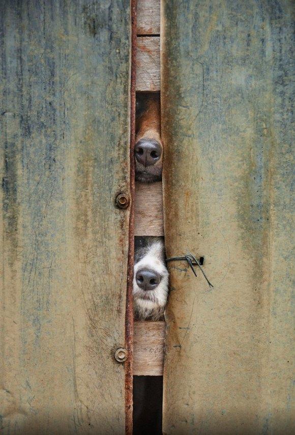 Cachorros que gostam de olhar a rua 20
