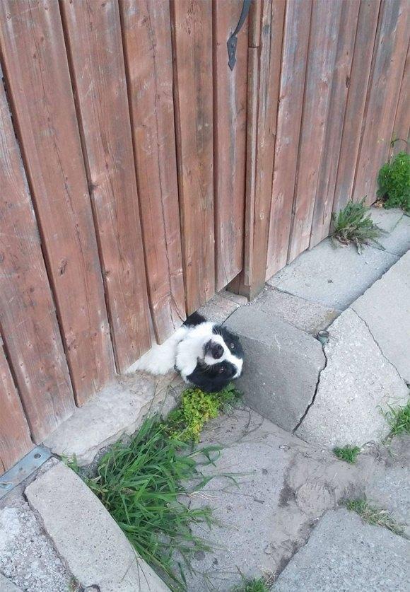 Cachorros que gostam de olhar a rua 9