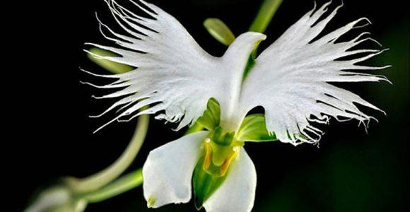 14 plantas incríveis que se parecem com outras coisas