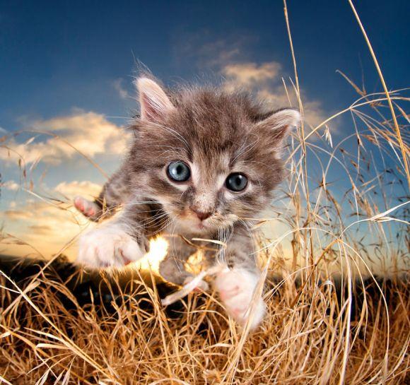 filhotes-de-gato-3