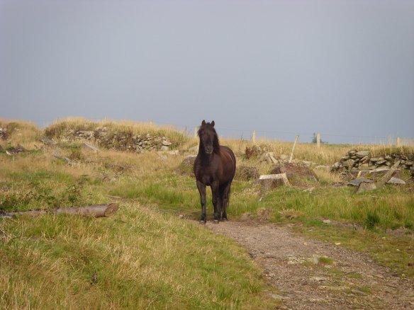 Lych Way Black Horse