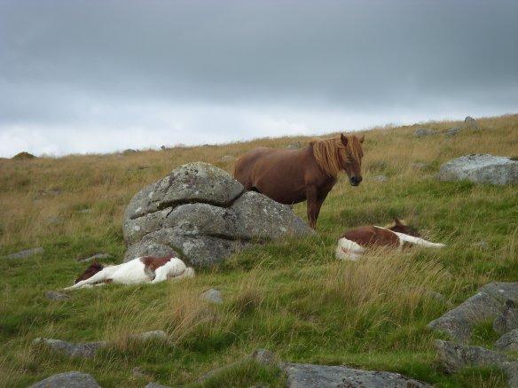 Dartmoor twins