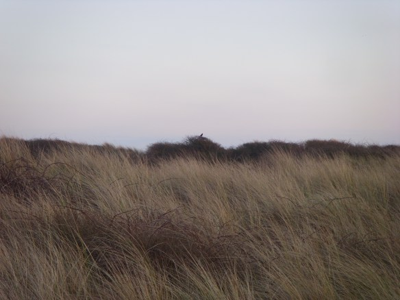 Crow Point - Braunton Burrows - Something about Dartmoor