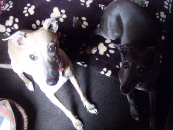 Fawn-like creatures. Mimi & Luna the whippets. Something about Dartmoor