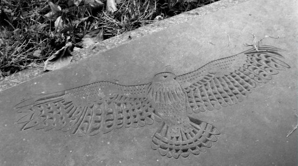 Detail of a Buzzard from a gravestone in my local churchyard.