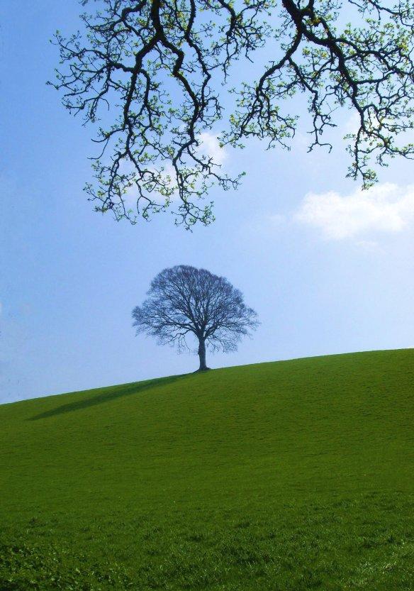 Favourite Tree Spring 2011