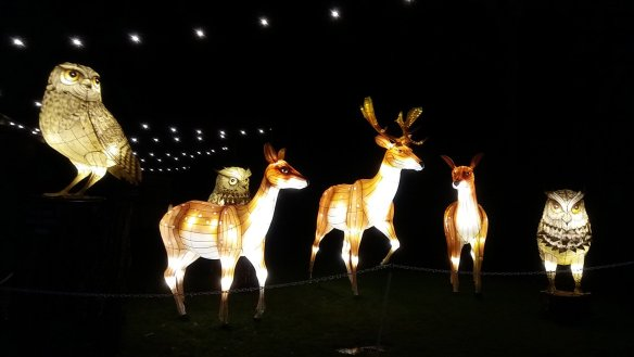 Longleat Festival Of Light. Deer and Owl lanterns (1)