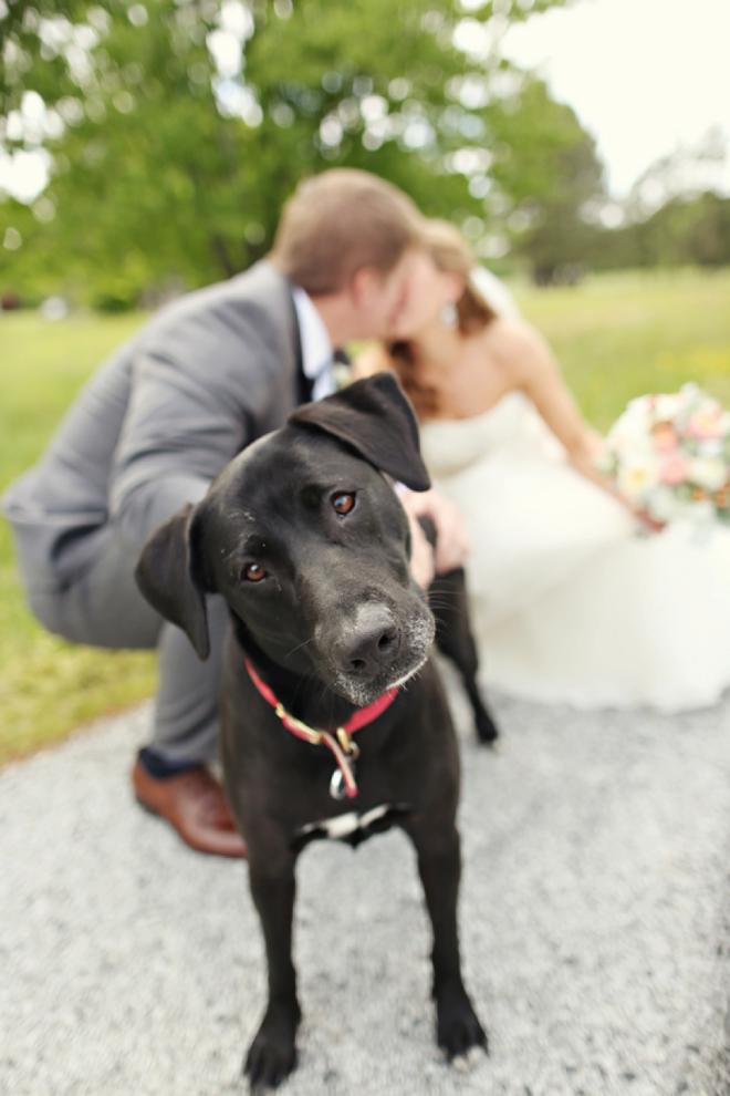 Darling dog in the bridal portrait