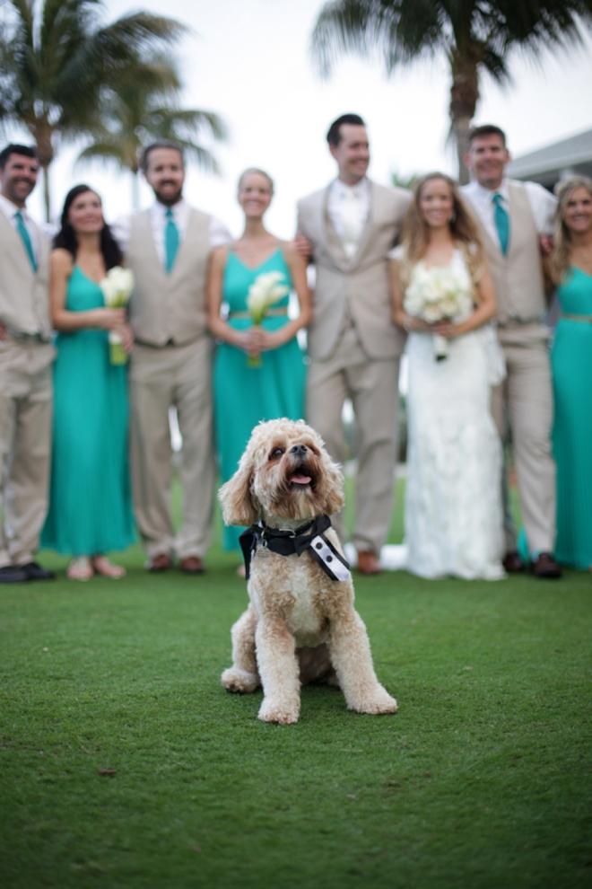 Cute dog in wedding