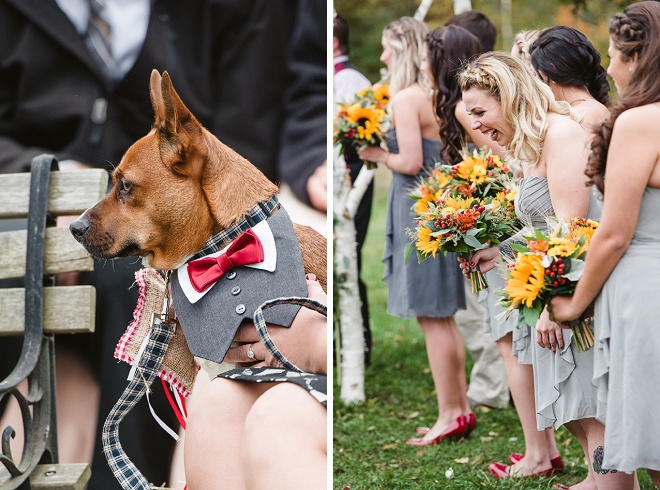 Loving This Sweet Dog In a Tux at Wedding!